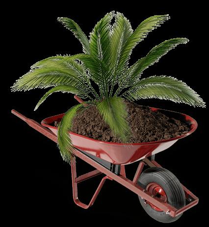 jardinagem-e-paisagismo-em-brasilia-df